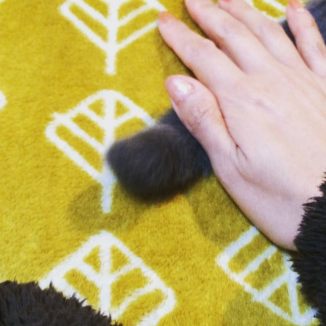しっぽすごいな。唐津のネイルサロン『Capri』http://capri.016.link