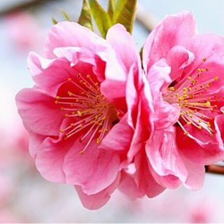 明日は、春のイベント、◯-yoga(和ヨガ) ご予約の皆様、お待ちしております #和yoga