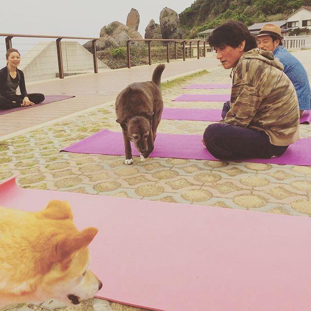 surfチームの「Beach Yoga」。 愛犬達に癒されるの巻。#beachyoga#surfing#立神岩#固くても大丈夫だからね