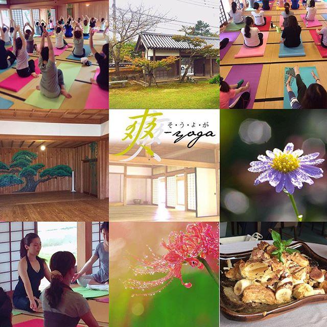 第二回目の《爽yoga》・私達に何か少しでも出来ることがあると信じて。・爽yogaでは、・皆様の参加費の一部を熊本震災の義援金にしていきます。・どなたでも参加出来る楽しいyogaなのでまたお気軽にお友達やご家族でお越し下さいませ。・又、次回は冬バージョンでご用意します・沢山のご参加ありがとうございました・http://yogamate.016.link/#唐津#yogamate#爽yoga#日曜の朝#埋の門館#芦の花
