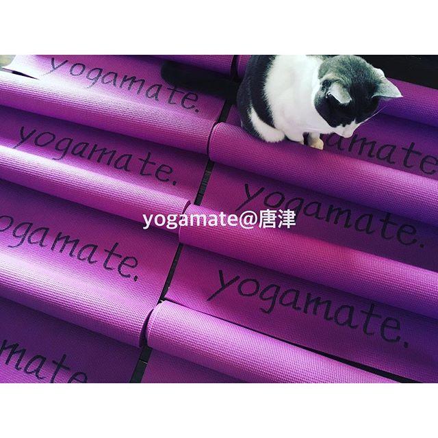 自分の身体を大事にしよう。・・ 『yogamate@唐津』ヨガ体験レッスン↓↓↓http://yogamate.016.link/・#唐津#ヨガ#yogamate