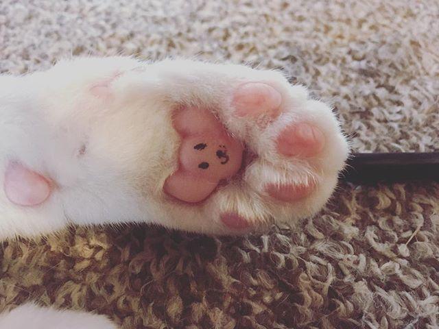 ネズミ発見♡#cat #肉球
