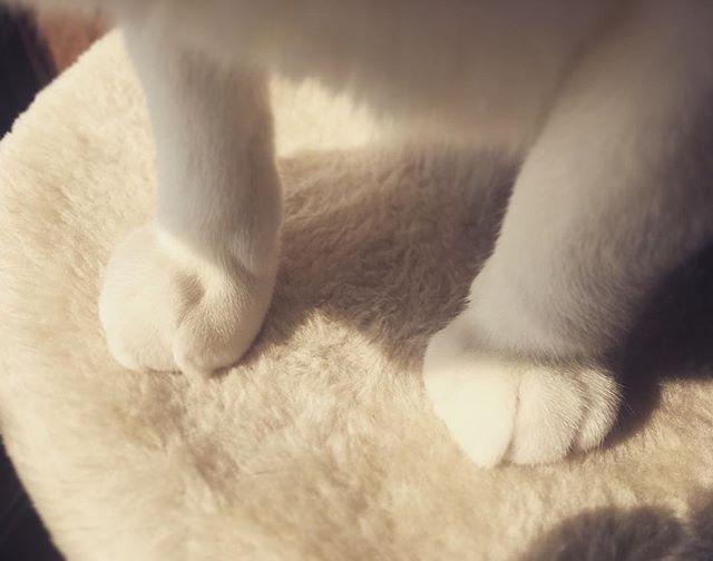 ぼくどらえもん#cat #lovecats #instagramcats #cats #ilovecat #catlover #funnycat #ilovemycat #instacats #猫 #ねこ
